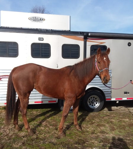 Flaming Tong, American Quarter Horse Mare for sale in Indiana